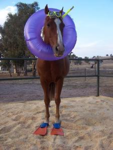 new seahorse found